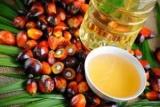 Врачи сказали, какие болезни вызывает пальмовое масло