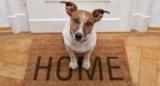 Домашние животные помогают сохранить психическое здоровье, – результаты исследования